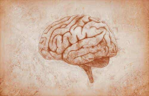 The Motor Cortex: Characteristics and Functions