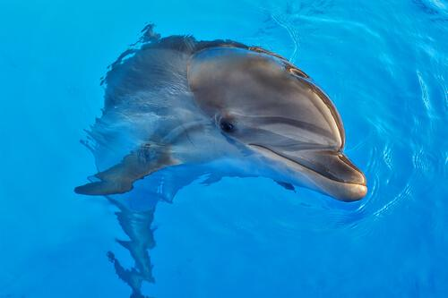 Dolphin-Assisted Therapy: Benefits and Controversy