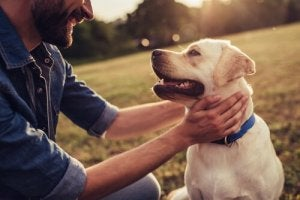 Dog Stories that Made History