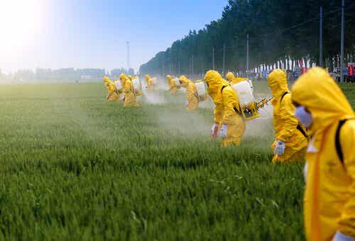 The Effects of Pesticides on the Brain