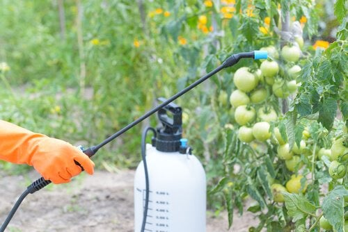 A person spraying pesticides on fruit.