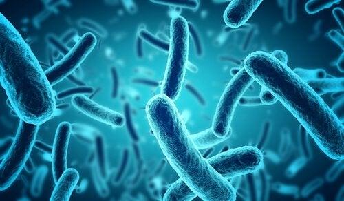 Blue bacteria.