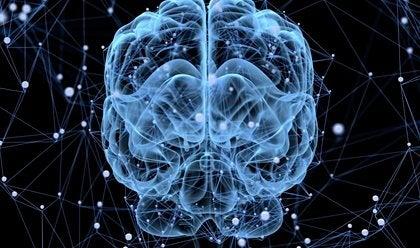 Does the Brain Sleep?