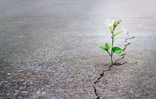 A flower in concrete representing wabi-sabi.