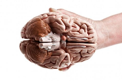 A hand holding a brain.