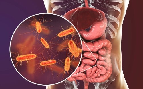 Bacteria in the gut.