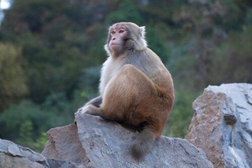 A monkey sitting on a rock.