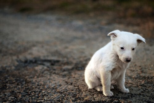 A sad-looking puppy representing animal consciousness.