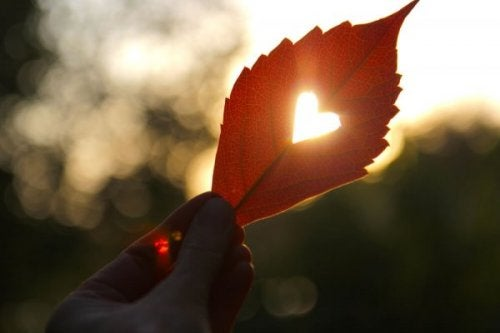 Light shinning through a heart punctured leaf.