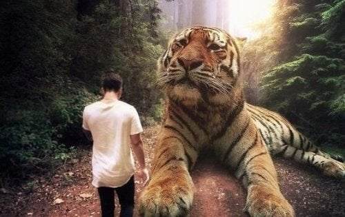 A man walking next to a big tiger.