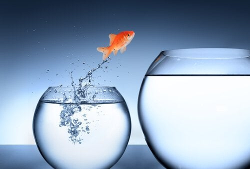 A fish jumping from one fish bowl to another.