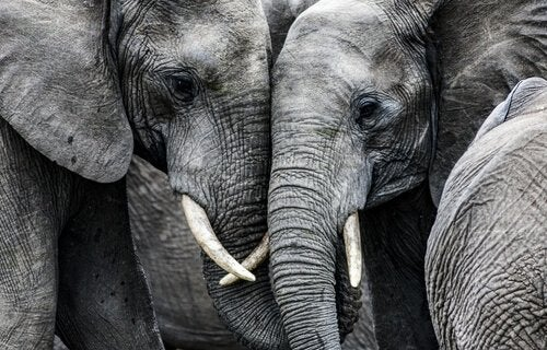 two sad elephants
