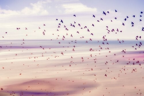 A large flock of birds flying up from the shores of a beach.