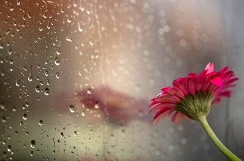 a pink flower leaned against a window pane with raindrops