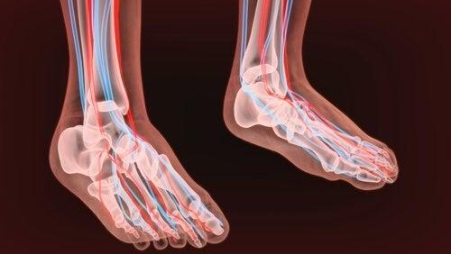 Foot nerves.