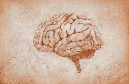 The Premotor Cortex: Functions and Characteristics