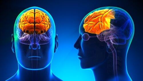 Front and side view of a person with a highlighted frontal lobe.