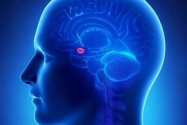 The amygdala in the brain.