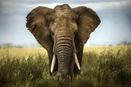 The Six Blind Sages and the Elephant: Learning to Value Other People's Opinions