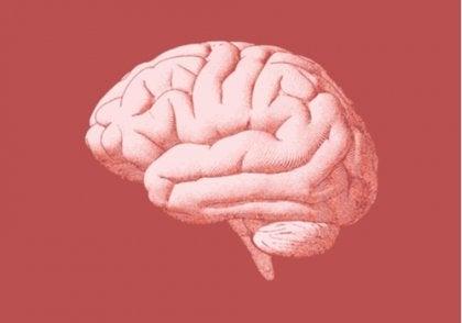 An illustration of the human brain.