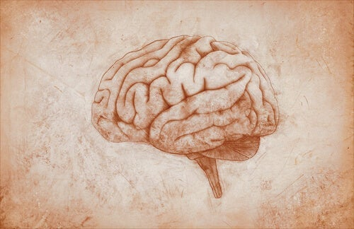 A drawing of a brain.