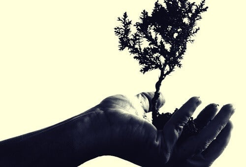 A hand holding up a tiny tree.
