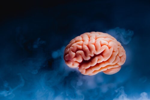 A brain on a dark blue background.