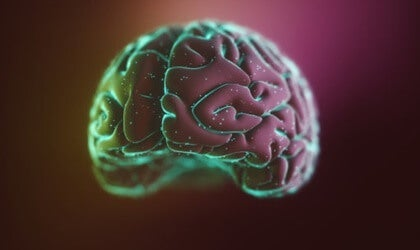 The Neocortex: Its Structure and Functions
