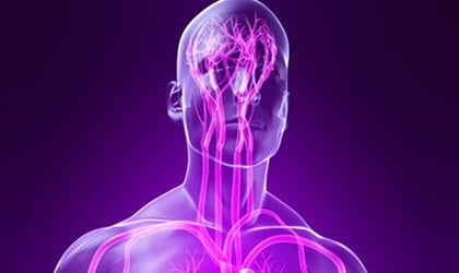 The Parasympathetic Nervous System: Characteristics and Functions