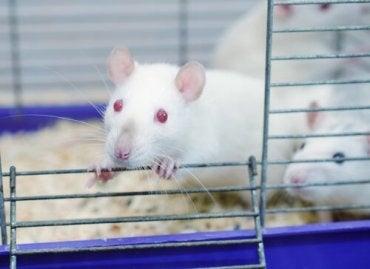 The Rat Park Experiment