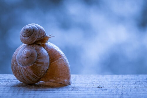 One snail on top of another.