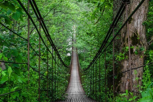 A suspension bridge just like the one used to conduct the misattribution of arousal theory.