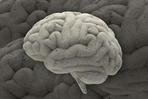 Three Fascinating Neuroscience Cases