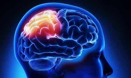 The Parietal Lobe: Functions, Anatomy, and Curiosities