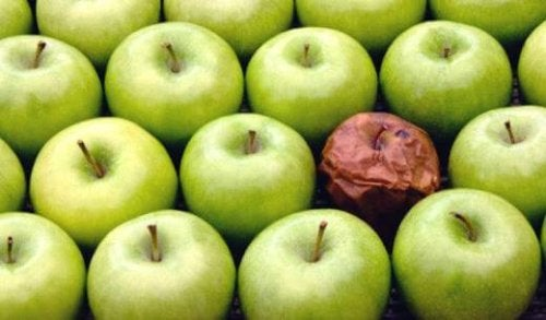 The Rotten Apple Theory in the Workplace