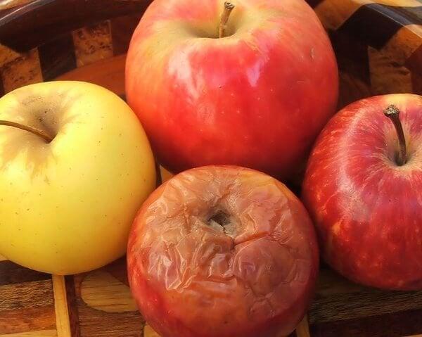 A rotten apple.