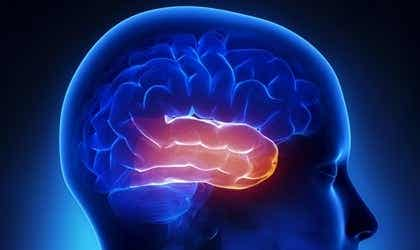 The Temporal Lobe: The Center of Memory and Emotions