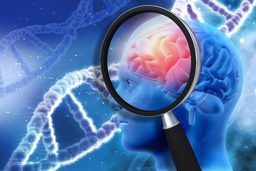 A brain as seen through a magnifying glass.