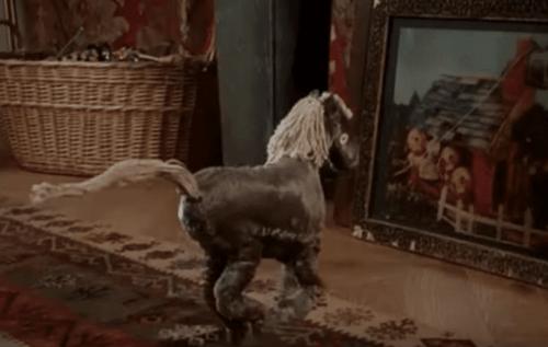 A tiny horse.