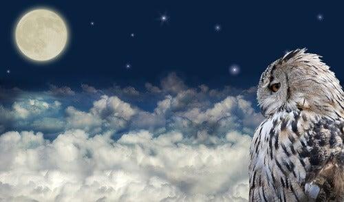 An owl at night.