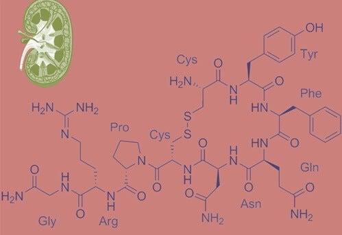 A chemical diagram of vasopressin the anti-diuretic hormone.