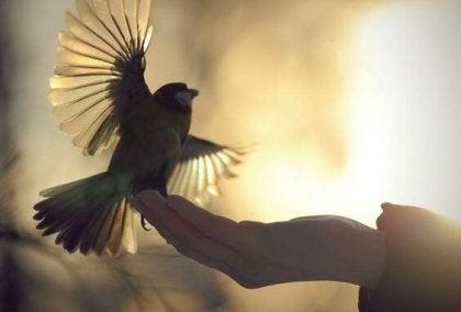 A bird landing on someone's hand.
