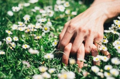 Two people holding hands in a field of flowers.