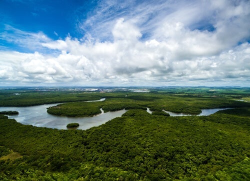 A photograph of the Amazon river.