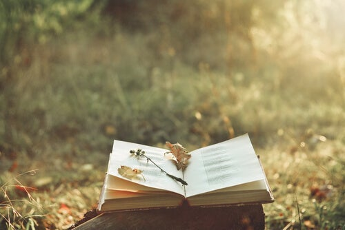 An open book in a sunny field.