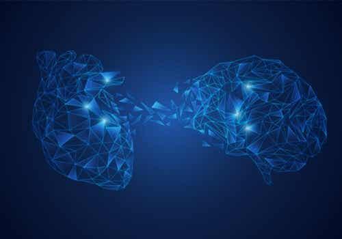 Neurovisceral Integration Model: the Brain-Heart Connection