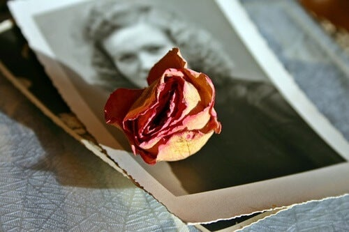 A rose on top of an old photograph.
