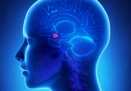 The Amygdala and Anxiety: What's the Link?