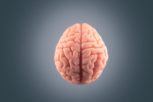 A brain on a grey background.