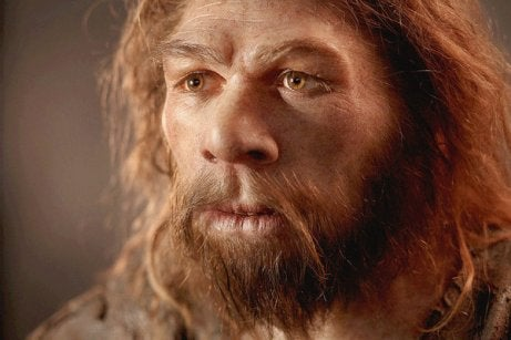 The Neanderthal Brain (Homo Neanderthalensis)